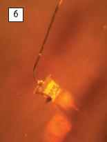 Рис. 5б. Кристалл типа MBright С460МВ290 смонтированна специальном кристаллодержателе без оптики (а, б)