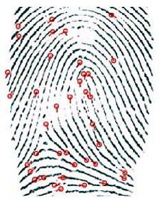 Рис. 2. Детали отпечатка пальца